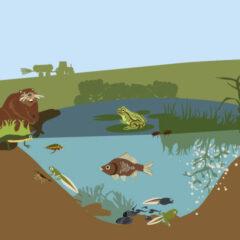 Leben in Teich- und Flusslandschaft